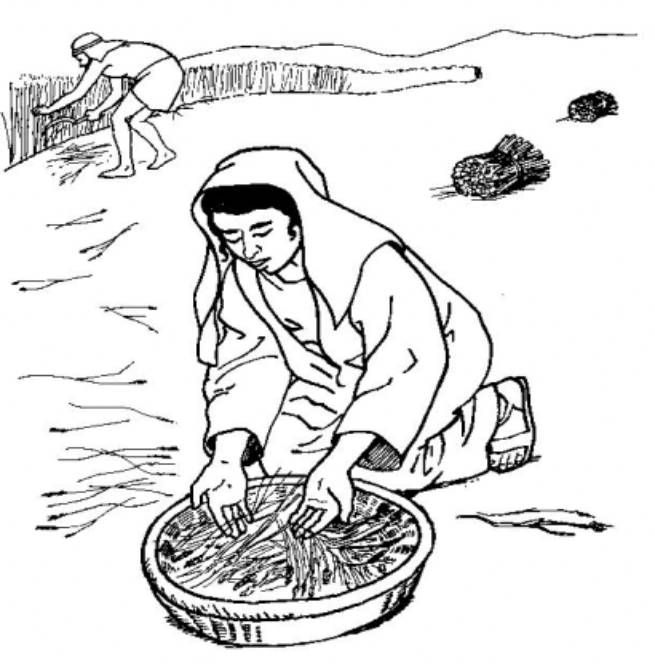 ruth gleaning coloring pages - photo#4