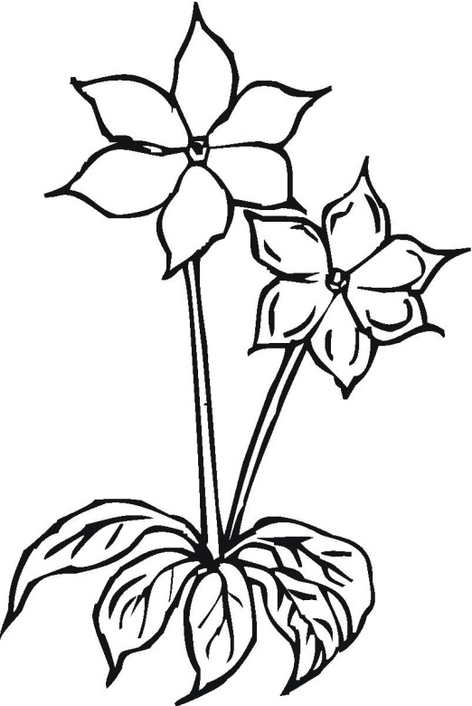 flower 15 coloring page - Coloring Pages Flowers Print