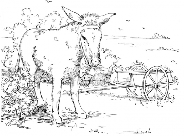 Donkey 5 coloring page