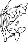 Flower 06 coloring page