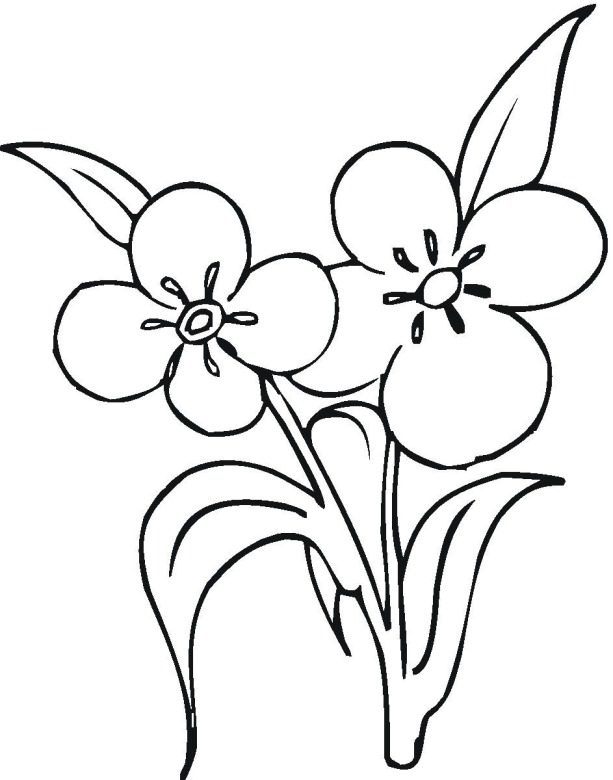 Flower 12 coloring page